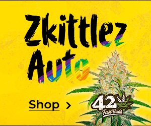 Banner von FastBuds »Zkittlez Auto«