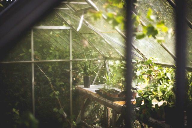 Gewächshaus mit optimalen Bedingungen für den Hanfanbau