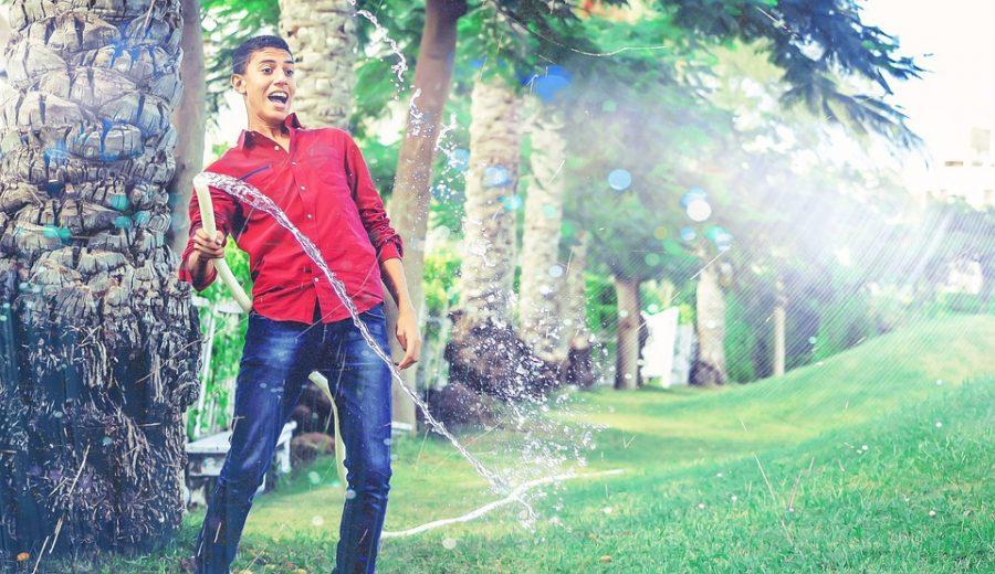 Anfänger beim Bewässern seiner Hanfpflanzen